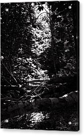 Acrylic Print featuring the photograph Ray Of Light by Keith Elliott