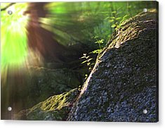 Rays Acrylic Print by Jerry LoFaro
