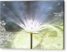 Rays Of Hope Acrylic Print
