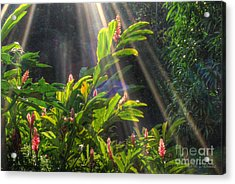 Rays Of Sunlight Acrylic Print