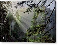 Morning Rays Through An Oregon Rain Forest Acrylic Print