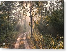 Rays Through Jungle Acrylic Print