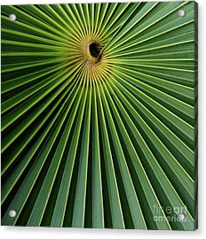 Razzled Rays Mexican Art By Kaylyn Franks Acrylic Print