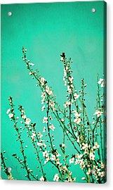 Reach - Botanical Wall Art Acrylic Print by Melanie Alexandra Price