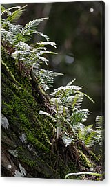 Reach For The Light Acrylic Print by Christopher L Thomley