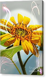 Reach For The Sun Acrylic Print by Lori Mellen-Pagliaro