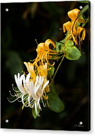 Reaching Acrylic Print by Christopher Holmes