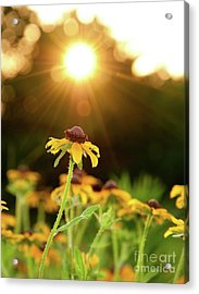 Reaching For Evening Sun Acrylic Print