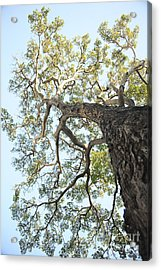 Reaching For The Sky Acrylic Print by Brandon Tabiolo - Printscapes