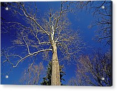 Acrylic Print featuring the photograph Reaching For The Sky by Suzanne Stout