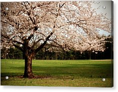 Reaching Out - Ocean County Park Acrylic Print by Angie Tirado