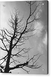 Reaching Out Acrylic Print by Linda Woods