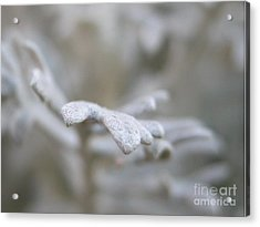 Reaching Out Acrylic Print by Michelle Hastings