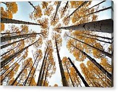 Reaching The Sky Acrylic Print