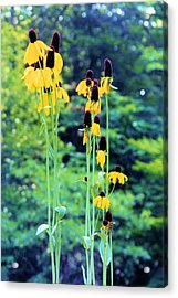 Reaching Up Acrylic Print by Jan Amiss Photography