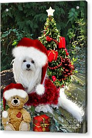 Ready For Christmas Acrylic Print