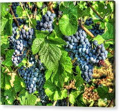 Ready For Harvest Acrylic Print by Alan Toepfer