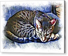 Ready For Napping Acrylic Print by David G Paul