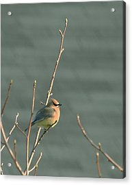 Ready For Spring Acrylic Print by Magda Levin-Gutierrez