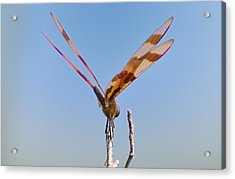 Ready For Take Off Acrylic Print by Bill Cannon