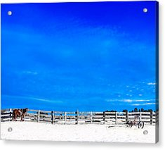 Ready For The Day Acrylic Print
