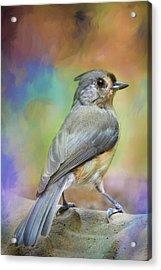 Ready For The Morning Bath Songbird Art Acrylic Print by Jai Johnson