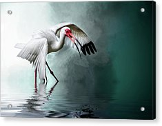 Ready Or Not, Here I Come... Acrylic Print