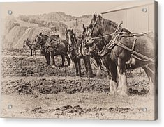 Ready To Plow Acrylic Print by Joe Hudspeth