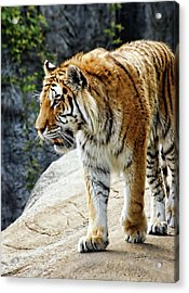 Ready To Pounce Acrylic Print by Gordon Dean II