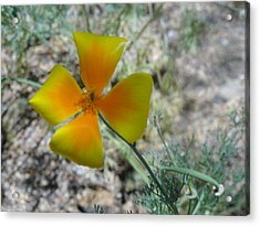 One Gold Flower Living Life In The Desert Acrylic Print