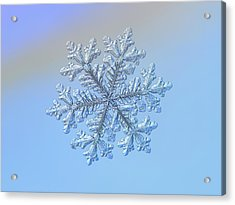 Acrylic Print featuring the photograph Real Snowflake - Hyperion by Alexey Kljatov