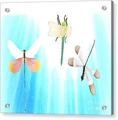 Realization Of Life Acrylic Print by Belinda Threeths