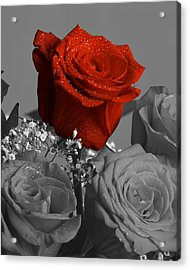 Really Red Rose Acrylic Print