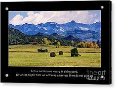 Reap A Harvest Acrylic Print