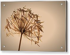 Acrylic Print featuring the photograph Reap What You Sow by Tim Nichols