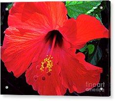 Reb Hibiscus Flower Acrylic Print