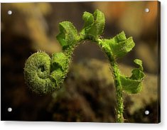 Acrylic Print featuring the photograph Rebirth by Mike Eingle