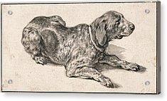 Reclining Dog Acrylic Print
