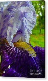 Recollection Spring 4 Acrylic Print