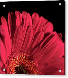 Acrylic Print featuring the photograph Red 4 by Sheryl Thomas