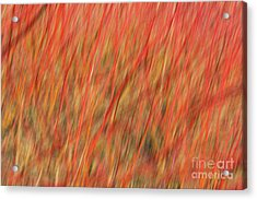 Red Abstract Acrylic Print