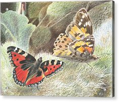 Red Admiral And A Painted Lady Acrylic Print by Maureen Carter