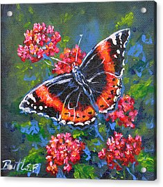 Red Admiral Acrylic Print by Gail Butler