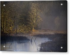 Red Alder Along Colewort Creek Acrylic Print