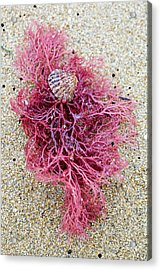 Acrylic Print featuring the photograph Red Algae by Frank Tschakert