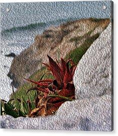Red Aloe Vera By The Sea Acrylic Print