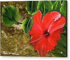 Red Amapola Acrylic Print by Maria Williams
