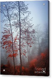Acrylic Print featuring the photograph Red And Blue by Elena Elisseeva