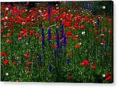 Red And Blue Wildflowers And Poppies Acrylic Print by Martin Morehead