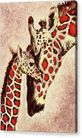 Red And Brown Giraffes Acrylic Print